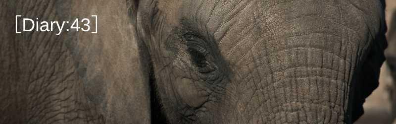 調教された象と記念写真!?|覚せい剤|ブルフック|のんこ