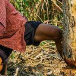 木こり|野生のタラの芽