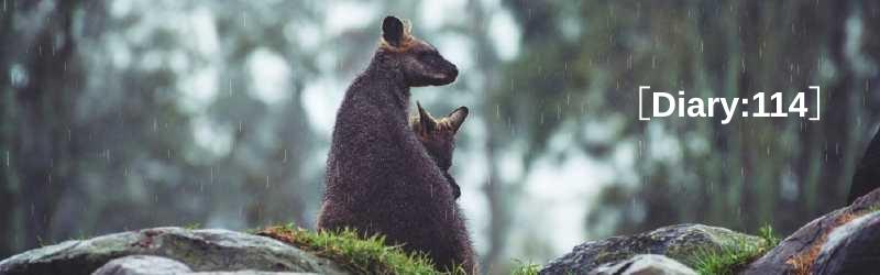 雨降りは、親方とぼくのネコ曜日