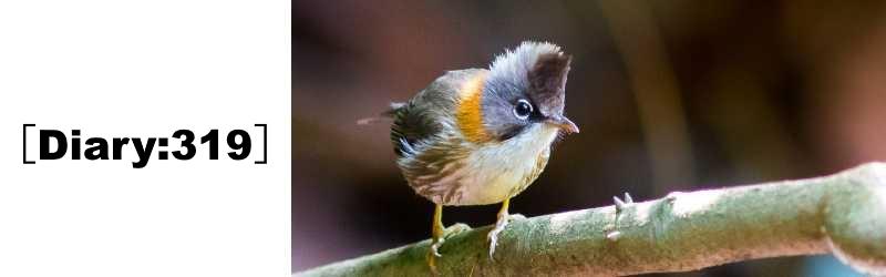 野鳥に餌を与えたい|室内利用の薪棚