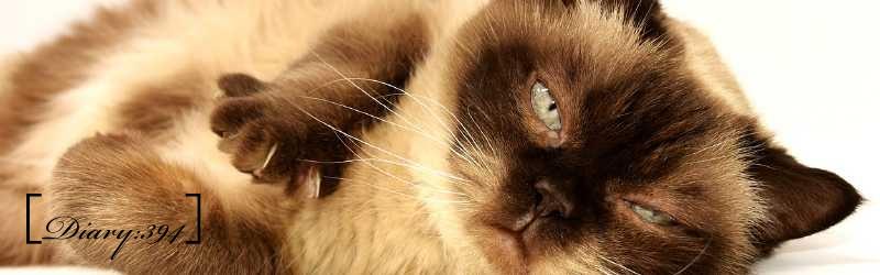 違反切符に新展開!?|猫を飼っているのに貧乏なのは飼い主のせい?