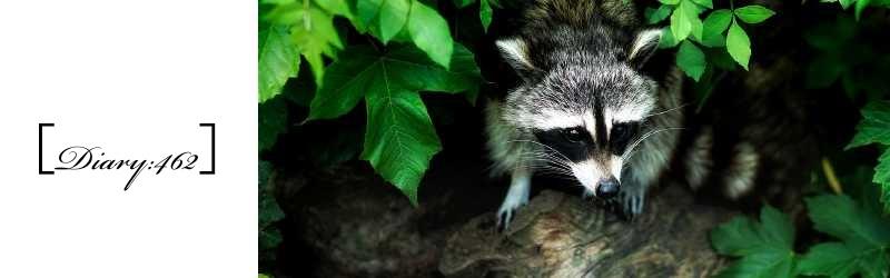新種の動物か皮膚病のタヌキか…?|おまけ:エノコロ草と猫
