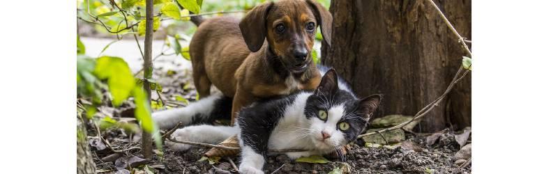 【Part 2】[10/24(午後)~30]|深みにハマった犬猫の世話|大人気の偽物