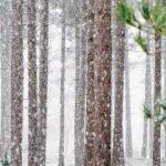 [別荘が欲しい!]冬の避暑地が辛いのは道理