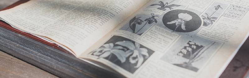 著作権フリーの百科事典|薪ストーブのある生活