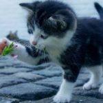 野良猫に魚を盗られたら…|新種発見の可能性(少し本気)