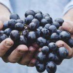 実山椒の収穫とレシピ|おまけ:無限イチゴ